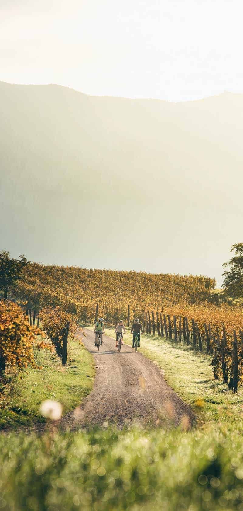 Bike Tour Vipava Valley