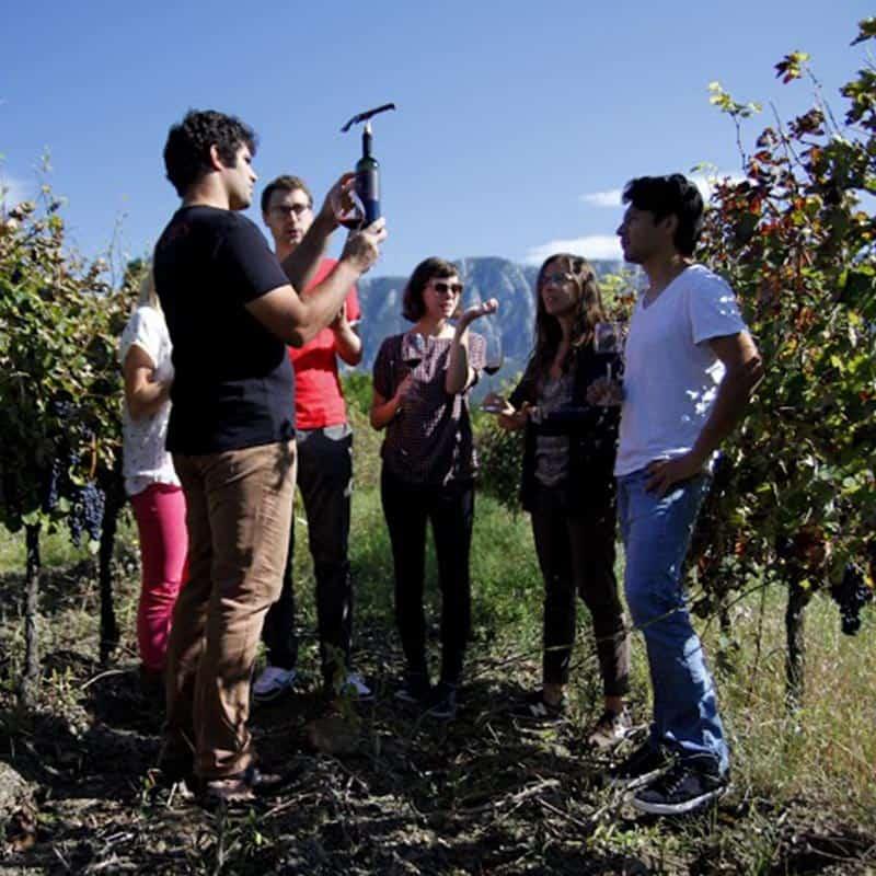 Winetour Vipava Valley